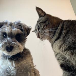 マンション工事。騒音の中の犬と猫
