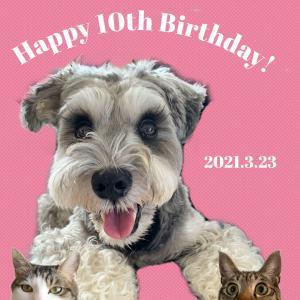 祝!10歳の誕生日。もう10年まだ10年。