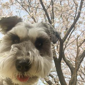 桜の季節が終わった後は・・・