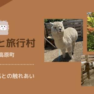 【久万高原町】四国でココだけ!アルパカと触れあえる!!「ふるさと旅行村」は自然体験の宝庫!