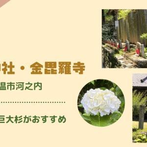 【東温市】あじさいの杜と呼ばれる「惣河内神社」と4本の名杉がある「金毘羅寺」の紹介。