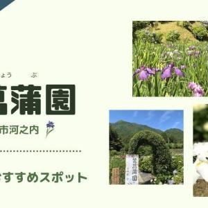 【東温市】梅雨の時期におすすめ!花菖蒲園に行って来ました。