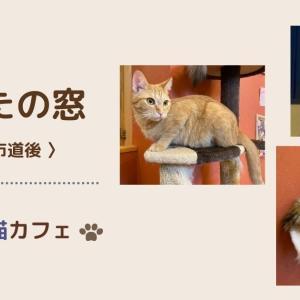 【愛媛県松山市】猫カフェ『日なたの窓』でかわいい猫達に癒されました!実際の様子を紹介します。