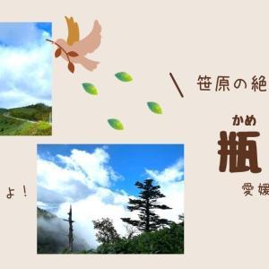 【子供と登山】笹原の絶景!人気の瓶ヶ森へ登ろう!CM起用されたUFOラインも見渡せます。
