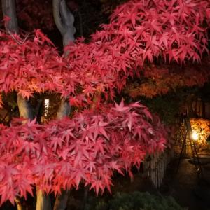 日本に恋をするー四季折々の和菓子