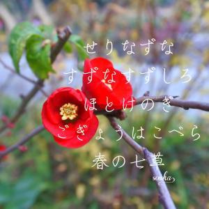 日本に恋をするー徳川園季節の眺めお散歩便り