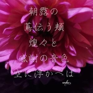 日本に恋をするー日本茶のちから カテキンパワーと免疫アップ