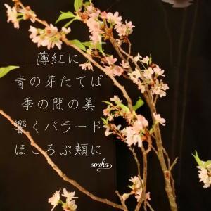 四季折々の季節を味わう花散歩
