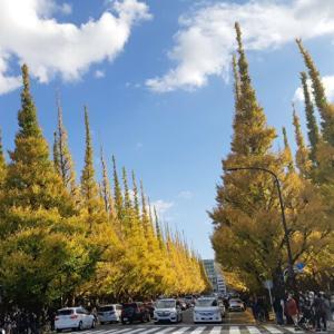 見頃!神宮外苑前のイチョウ並木の景色をお届け