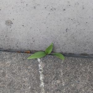外廻りの隙間に、雑草・落ち葉が挟まってる。そんな時には…