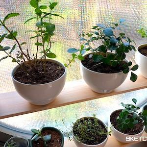 朝日がはいる窓にパワースポットを観葉植物でつくる