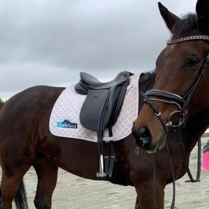 元競走馬を馬場馬のように馬装して撮影。ジプシー良いね!
