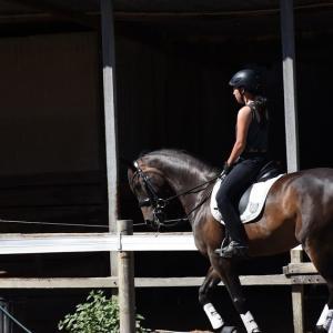 元自馬ロミの調教前、調教後、の動画を投稿しました。