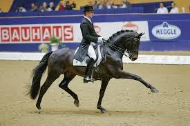 【洗い場でおとなしい馬は重宝される】騎乗者が馬の命運を左右する