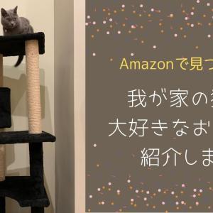 シャルトリュー猫も夢中で遊ぶ!Amazonで買って良かった猫おもちゃ