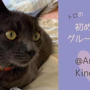 LAで猫のグルーミングサービス&ネイルキャップ【Animal Kingdom of Santa Monica】レビュー