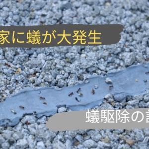 アメリカの家にアリが出た!【原因&対策】アリ駆除の方法まとめ