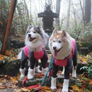 秋の金剛山に登りました