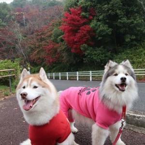 摂津峡公園で朝のお散歩