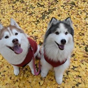 秋の大阪城へ行きました