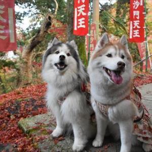 京都山科の毘沙門堂へ行きました