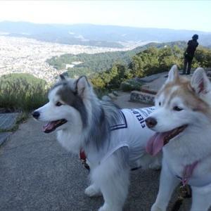 大文字山に登りました