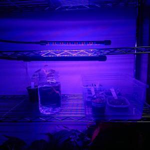 植物育成用ライト【LED紫】を解説してみた【口コミ評価レビュー】
