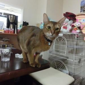 引っ越しは猫にとってかなりのストレス