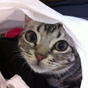 美しい猫ちゃん