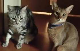 猫ちゃんたちの好物