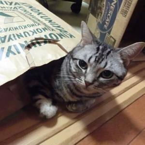 猫は紙袋が好き