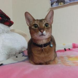 今日は暖かくてなんとなく猫日和
