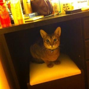 猫は暖房が大好き冷房は嫌い
