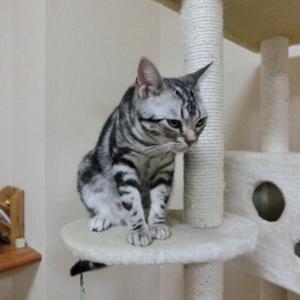 猫がよろこぶキャットタワー