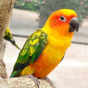 鳥ってなんであんなにカラフルな身体をしているの?鳥の先祖は恐竜!?