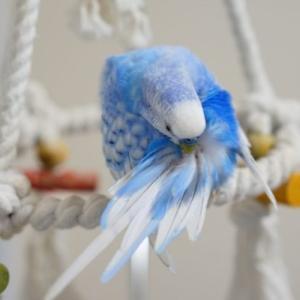 インコの羽が大量に抜ける!?病気と換羽の違いについてご紹介!