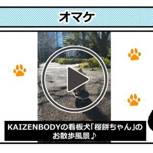KAIZENBODY<Youtubeチャンネル>3分下半身痩せストレッチ!