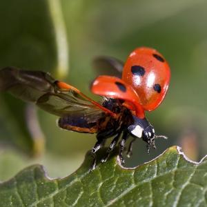 造形にびっくりする昆虫の世界