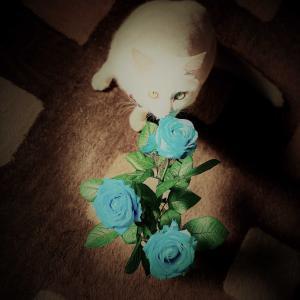 薔薇とねこ