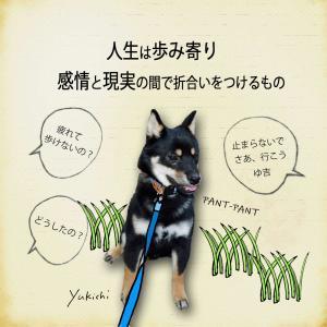 【犬のいる暮らし】歩み寄りが大切