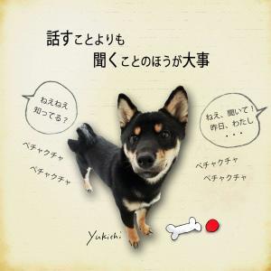【犬のいる暮らし】犬に癒されるわけ