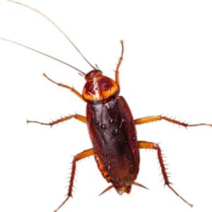 ゴキブリは何故怖いのか?ゴキブリが発生する季節!早め早めの対策を!