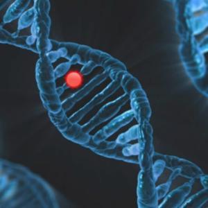 遺伝子組み換えと品種改良の違い、日本人は遺伝子組み換え作物摂取過多?