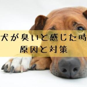 犬が臭い原因はどこにある?日々のボディケアでにおい対策をしよう!