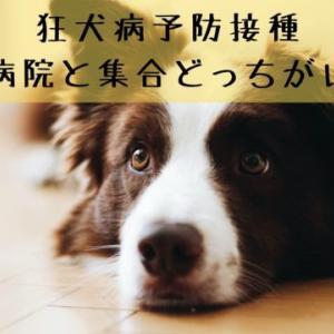 狂犬病予防注射は動物病院と集合どっちがいい?メリットとデメリット