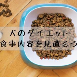 犬のダイエット方法は食事を改善しよう!体重が減らない原因は何?