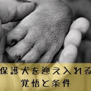 保護犬を引き取りたい時の条件【7つ】覚悟と責任を持って里親になろう!
