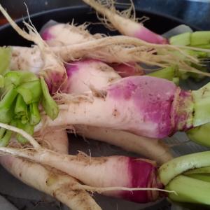 野沢菜のカブが美味しい話