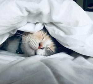 寝るための3つのルーティン