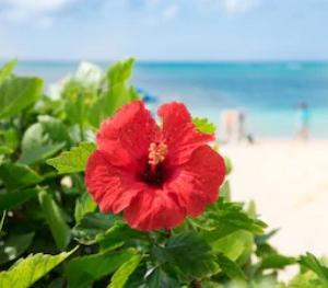 沖縄特産、シークワーサー、沖縄もずくクーガ芋、四角豆、黒ニンジン、健康に良い物特集